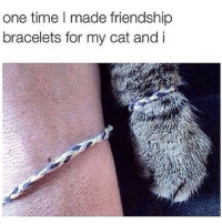 Cats, Food, and Instagram: one time I made friendship  bracelets for my cat and i I'm not a ride or die chic...I have questions. Like where r we riding 2? Can my cat come? Why do I have 2 die? Why didn't you like my pic? Can we stop 2 get food? Are you following my cat on Instagram? Did you like all 76 pics I sent you last night of my cat? myfuture iaintevenmad 😺