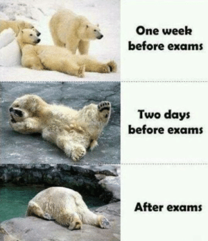One Week: One week  before exams  Two days  before exam  After exams