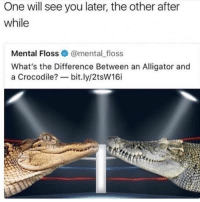 Alligator, Girl Memes, and Crocodile: One will see you later, the other after  while  Mental Floss·@mental-floss  What's the Difference Between an Alligator and  a Crocodile? bit.ly/2tsW16i 😂😂😂🤣🤣🤣
