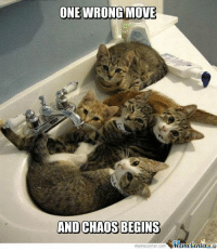 Grumpy Cat: ONE WRONG MOVE  AND CHAOS BEGINS  memecenter-com
