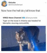 @hilarious.ted is the master of animal memes: Onizuka  @OnizukaSenpai  Now how the hell do y'all know that  WREG News Channel 3ネ@3onyourside  Tiger on the loose in Atlanta was headed for  Memphis via.wreg.com/uAONj @hilarious.ted is the master of animal memes