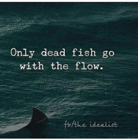 go with the flow: Only dead fish go  with the flow.  fb/the idealist