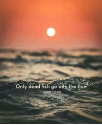 go with the flow: Only dead fish go with the flow  SERE TOUCH