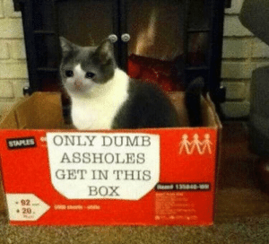 Meirl by goldenboy11944 CLICK HERE 4 MORE MEMES.: ONLY DUMB  STAPLES  ASSHOLES  GET IN THIS  BOX  Heme 135048-  92  Rts  20 Meirl by goldenboy11944 CLICK HERE 4 MORE MEMES.