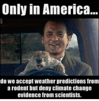 Funny: Only in America  do we accept weather predictions from  arodent but deny climate change  evidence from scientists. Funny