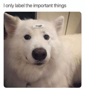Animals, Cute, and Dogs: only label the important things  doggo Not much in this world can bring out the smiles like our furry canine friends! #Memes #Animals #Dogs #Cute
