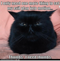 Memes, 🤖, and Set: Only need One inore thing to Set  elil plan into motion  n  Thumbs. I need thumbs.