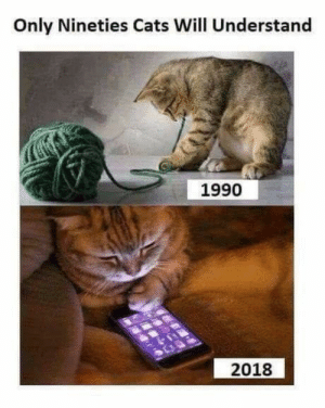 The joy of the 90s: Only Nineties Cats Will Understand  1990  2018 The joy of the 90s