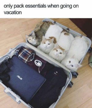 It is all I need.: only pack essentials when going on  vacation It is all I need.