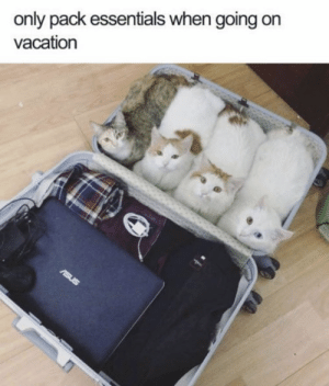 Memes, Vacation, and 🤖: only pack essentials when going on  vacation  rsus https://t.co/ifyQ9aGLRJ