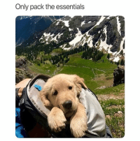 Fresh, Memes, and Animal: Only pack the essentials 42 Fresh Animal Memes Dump of the Day