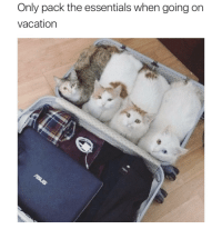 """Http, Vacation, and Essentials: Only pack the essentials when going on  vacation <p>Only Pack The Essentials via /r/wholesomememes <a href=""""http://ift.tt/2oE9Uf0"""">http://ift.tt/2oE9Uf0</a></p>"""