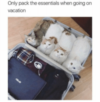 Dank, Vacation, and 🤖: Only pack the essentials when going on  vacation