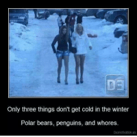 Memes, Winter, and Bear: Only three things don't get cold in the winter  Polar bears, penguins, and whores  Demotivation us ~Beast~