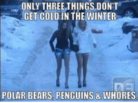 Cold: ONLY THREE THINGS DON'T  GET COLD IN THE WINTER  POLAR BEARS PENGUINS & WHORES