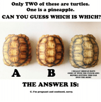 I am turning myself in to the police.: Only Two of these are turtles.  One is a pineapple.  CAN YOU GUESS WHICH IS WHICH?  I REALLY SHOULD HAVE  WITH THE PUNCHLINE  BEFORE GETTING THIS FAR  INTO THE MEME  THE ANSWER IS:  c. I'm pregnant and confused, sorry. I am turning myself in to the police.