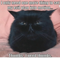 Grumpy Cat, Evil, and Needed: Onlyneed One Inore thing to Set  my evil plan into motion  Thumlis I need thumbs