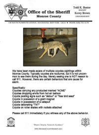 """Should I call 911 when I see a coyote?: ONROE CO  SHERIFF  Todd K. Baxter  SHERIFF  Office of the Sheriff Korey Brown  Monroe County  UNDERSHERIFF  130 somi PLYMOUTH AVENUE. ROCHESTER, NEWYORK 14614  PHONE (585 753-4178  We have been made aware of multiple coyotes sightings within  Monroe County. Typically coyotes are nocturnal, but it is not uncom-  mon to see them during the day. Merely seeing one is NOT reason to  call 911. However, there are certain behaviors that are cause for  alarm.  Specifically:  Coyotes carrying any producted marked """"ACME""""  Coyotes dropping anvils from hot air balloon  Coyote posting signs such as """"detour"""" or """"free bird seed""""  Coyote in possesion of a giant magnet  Coyote in possession of a catapult  Coyote detonating """"TNT""""  Coyote on roller skates with rockets attached  Please call 911 immediately if you witness any of the above behavior  """"Respect, Integrity, Teamwork, Excellence  www.MONROECOUNTYSHERIFF.INFO Should I call 911 when I see a coyote?"""