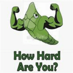 Metapod Harden | Best | Free |: ontle  How Hard  Are You? Metapod Harden | Best | Free |