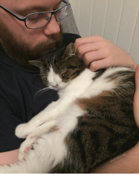 Cats, Dad, and Instagram: onty Boy net I found a cure for my Monday blues: snuggle time with my dad 😸💜 snuggles catstagram ilovemycat catdad cats_of_instagram cats_of_world myboy