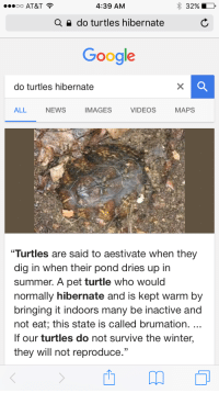 "Google, News, and Tumblr: OO AT&T  4:39 AM  32%  a  do turtles hibernate  Google  do turtles hibernate  ALL NEWs IMAGES VIDEOS MAPS  Turtles are said to aestivate when they  dig in when their pond dries up in  summer. A pet turtle who would  normally hibernate and is kept warm by  bringing it indoors many be inactive and  not eat; this state is called brumation.  If our turtles do not survive the winter,  they will not reproduce."" <p><a href=""http://memehumor.tumblr.com/post/155092106243/so-thats-what-it-takes-to-make-turtles-quit"" class=""tumblr_blog"">memehumor</a>:</p>  <blockquote><p>So that's what it takes to make turtles quit reproducing</p></blockquote>"