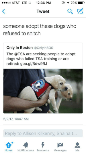 Ass, Bitch, and Dogs: oo AT&T LTE12:36 PM  79% |  Tweet  someone adopt these dogs who  refused to snitch  Only In Boston @OnlylnBOS  The @TSA are seeking people to adopt  dogs who failed TSA training or are  retired: goo.gl/BdW9RJ  6/2/17, 10:47 AM  Reply to Allison Kilkenny, Shaina t.  Home Notifications Moments Messages Me I need to get me a down ass bitch like this