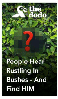 "Reddit, Snapchat, and Com: oo the  dodo  People Hear  Rustling Irn  Bushes And  Find HIM <p>[<a href=""https://www.reddit.com/r/surrealmemes/comments/7cv6g5/this_snapchat_article/"">Src</a>]</p>"