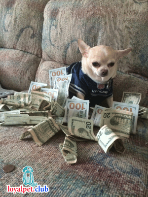 This is the money dog, upvote in the next 24 hours and money will come your way: OO0  OOL  NFD  NEW AND  ESOPASIERI  O0  SOLLA  SHVEO0  0  loyalpet.club  20  0 This is the money dog, upvote in the next 24 hours and money will come your way
