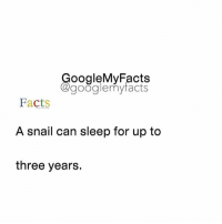 Google, Googleable Facts, and Snail: oogleMy Facts  google my facts  Facts  A snail can sleep for up to  three years. Tag a friend that sleeps a lot 😂🐌