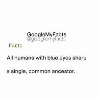 What is your eye color ?👀: oogleMy Facts  google my facts  Facts  All humans with blue eyes share  a single, common ancestor. What is your eye color ?👀
