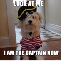 OOK AT ME  I AM THE CAPTAIN NOW  made on imgur