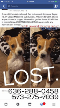 Memes, Neighbors, and Phone Number: ..ooo AT&T  9:30 PM  60%  Search  1 hr O Fallon, MO  5 mo old Female/unaltered. Got out around 6pm near Bryan  Rd. In Osage Meadows Subdivision. Answers to Gem. She is  a special needs puppy. We need to get her home ASAP! She  is microchipped(985112008474381)We appreciate any  news on our little gir  reward for safe return  saso LOST  636-288-0458  38 Shar  573-275-7039 UPDATE: Found safe and sound, hung out in a neighbors house all night. She is back with her family. Photos updates in next post.   GEM SNUCK AWAY TONIGHT.  O'FALLON AREA.  $250 reward for her safe return.  Phone numbers are below.   One harsh word about her getting away tonight and we will delete your comment. Her parents adore the ground she walks on just like all of us. They are sick with worry, do not be jerks. We all want little Gemmie right back with her mom and dad.   -Mac