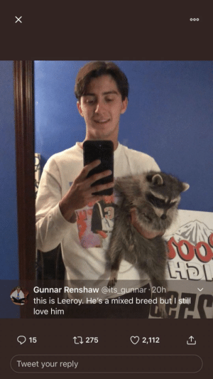 """""""Post a picture of your dog."""" …. a whole raccoon: ooo  LHDI  Gunnar Renshaw @its_gunnar 20h  this is Leeroy. He's a mixed breed but I still  love him  15  t275  2,112  Tweet your reply  X """"Post a picture of your dog."""" …. a whole raccoon"""