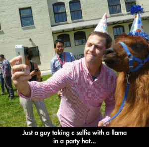 Dank, Party, and Selfie: op  DA  a selfie with a llama  Just a guy taking  in a party hat..  SUNDS