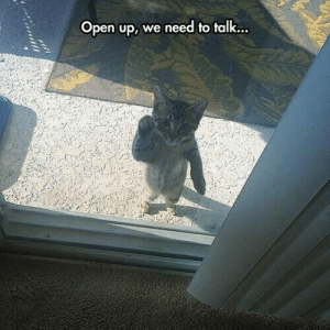 Tumblr, Blog, and Http: Open up, weneed to talk... srsfunny:  Open Up Right Meow!