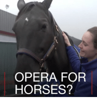 Animals, Horses, and Memes: OPERA FOR  HORSES? 11 APR: Pets are promised first-class treatment at the Ark at JFK airport, including opera music to help calm your animal before its next flight. Pets Ark Animals Dog Horse Grooming JFK Airport Lounge PetLounge NationalPetDay BBCShorts BBCNews @bbcnews