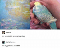 Beautiful, God, and Oh My God: opricat  my new bird is a monet painting  katharinemoe  Oh my god he's beautiful