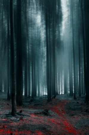 optic-culture:    The path of The Forgotten by borda   : optic-culture:    The path of The Forgotten by borda