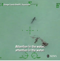 "Abc, Memes, and News: Orange County Sheriffs Department  (ELV  Attention in the water  attention in the water,  Abc NEWS rp @abcnews - ATTENTION IN THE WATER: Police in Southern California warn paddleboarders to exit the water in a ""calm manner"" as they are ""next to approximately 15 great white sharks."""