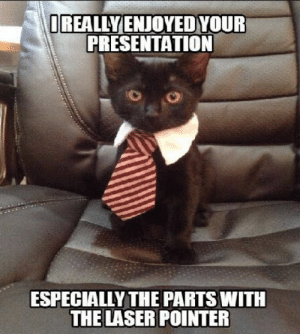 25 Business Cat Memes #sayingimages #businesscatmemes #businesscat #memes #funnymemes: OREALLY ENJOYEDYOUR  PRESENTATION  ESPECIALLY THE PARTS WITH  THE LASER POINTER 25 Business Cat Memes #sayingimages #businesscatmemes #businesscat #memes #funnymemes