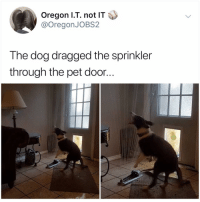 Memes, Oregon, and Hell: Oregon l.T. not IT  @OregonJOBS2  The dog dragged the sprinkler  through the pet door.. Y the hell haven't u followed @kalesaladanimals yet