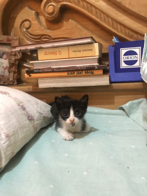 My girlfriend just adopted a new cat & sent me this....: ORION  Sultana's Dream  Begum Rokeya Sakhawat Hossein My girlfriend just adopted a new cat & sent me this....