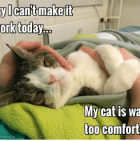 Sounds like a purrfect excuse to me! 😁: ork  today  it  it  Cant make My cat is wa  too comfort  onty Boy Cat Sounds like a purrfect excuse to me! 😁