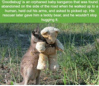 Memes, Bear, and Bears: orphaned baby kangaroo that was found  abandoned on the side of the road when he walked up to a  human, held out his arms, and asked to picked up. His  rescuer later gave him a teddy bear, and he wouldn't stop  hugging it. https://t.co/4tWgWoZIDY