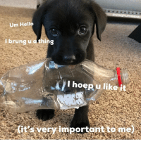 Hello, Memes, and Animal: Oryleegirl britishlab  Um Hello  I brung u o thing  I hoepu like i  (it's yery importantto me @doggosdoingthings is an absolute must follow for all animal lovers!! - First pic @ryleegirl_britishlab 👈 follow this cutie 😍😍