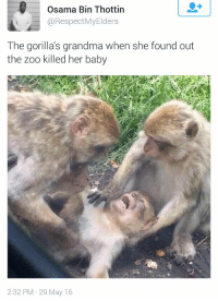 Oh noooo, not my baby!: Osama Bin Thottin  @Respect Elders  The gorilla's grandma when she found out  the zoo killed her baby  2:32 PM 29 May 16 Oh noooo, not my baby!