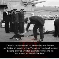 "Cats, Memes, and Oscars: ""Oscar"" a cat that served on 3 warships, one German,  two British, all sank in action. The cat survived each sinking,  floating away on wooden planks to rescue. The cat  was known as ""Unsinkable Sam""."
