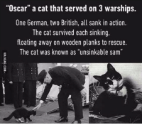 "On 3: ""Oscar"" a cat that served on 3 warships.  One German, two British, all sank in action.  The cat survived each sinking,  floating away on wooden planks to rescue.  The cat was known as ""unsinkable sam"""