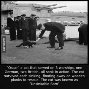 """British, Cat, and Oscar: """"Oscar"""" a cat that served on 3 warships, one  German, two British, all sank in action. The cat  survived each sinking, floating away on wooden  planks to rescue. The cat was known as  """"Unsinkable Sam"""" Unsinkable Sam"""