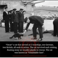 "Memes, Oscars, and Germanic: ""Oscar"" a cat that served on 3 warships, one German,  two British, all sank in action. The cat survived each sinking,  floating away on wooden planks to rescue. The cat  was known as ""Unsinkable Sam""."